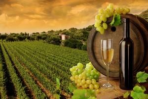 wina - szlachetna siódemka