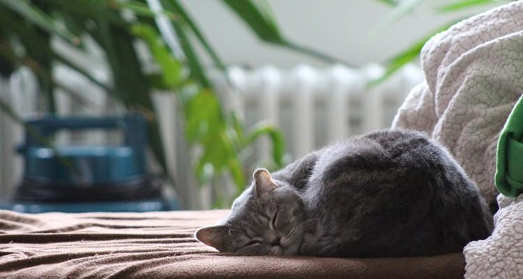 drzemka - power nap - cat